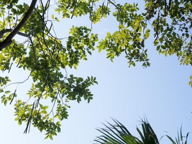 Vista De Ojo De Hormiga Del árbol Bajo La Sombra De Un Gran árbol