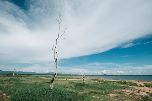 Vista del paisaje del árbol muerto Foto gratis