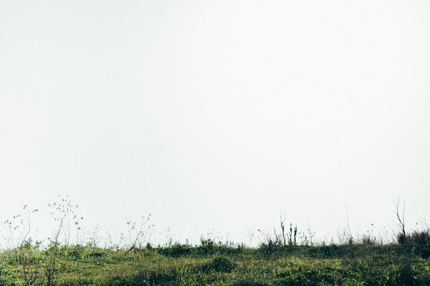 Vista panorámica del paisaje verde. Foto gratis