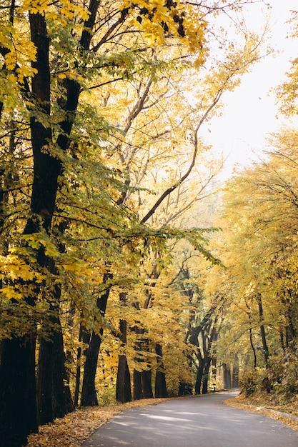 Vista del parque otoño Foto gratis