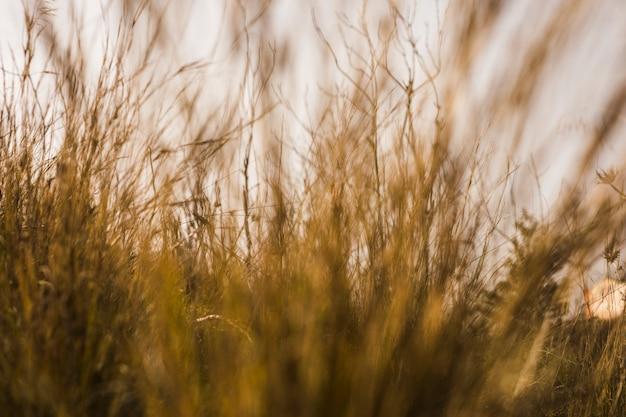 Vista de pastizales altos Foto gratis
