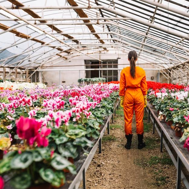 Vista posterior de un jardinero de pie cerca de flores que crecen en invernadero Foto gratis