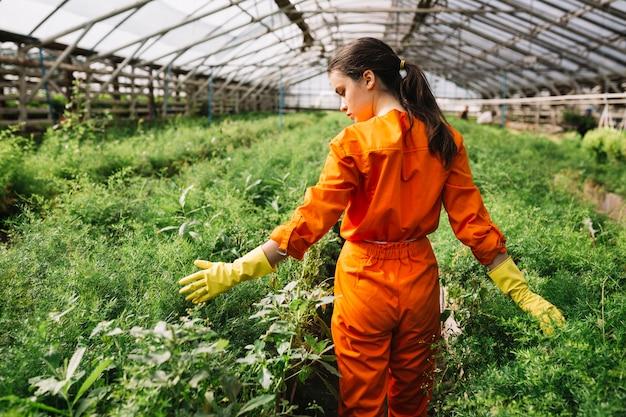 Vista posterior de un jardinero de sexo femenino que toca las plantas en invernadero Foto gratis