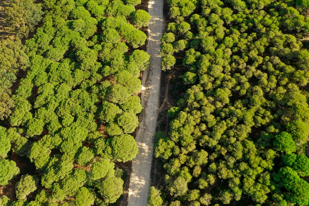 Vista superior del bosque verde y camino tomado por drone Foto gratis
