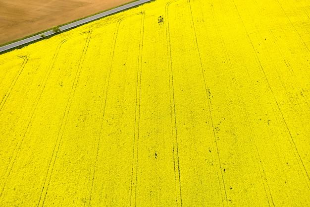 Vista superior de un campo de colza amarillo brillante y parte de un campo vacío separado por carretera en una esquina. textura natural con espacio de copia. Foto Premium