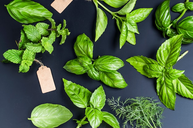 Vista superior de diferentes hierbas aromáticas Foto gratis