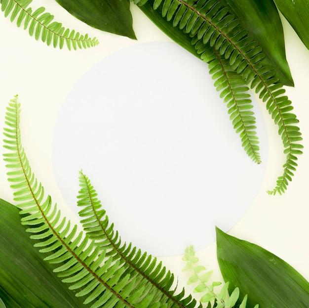 Vista superior de diferentes hojas y helechos con espacio de copia Foto gratis