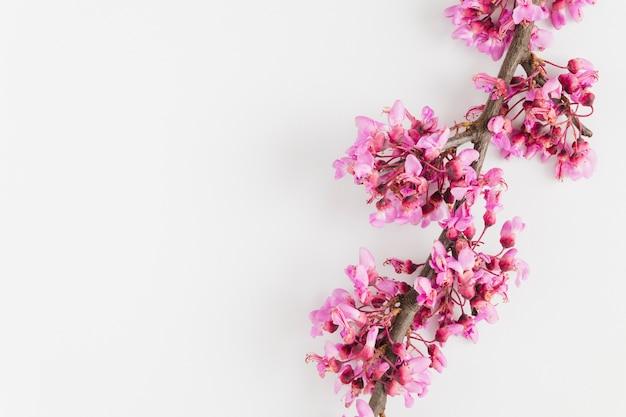 Vista superior flores con copy space Foto gratis