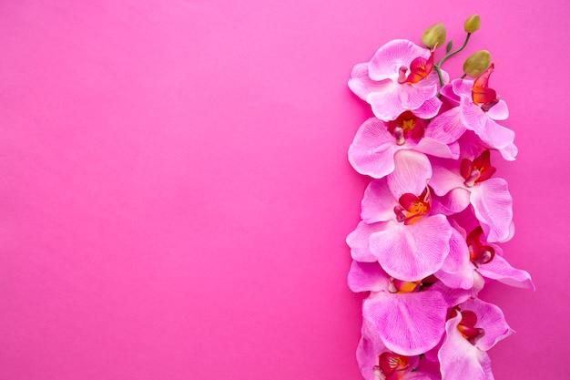 Vista superior de las flores de orquídeas sobre fondo rosa brillante Foto gratis