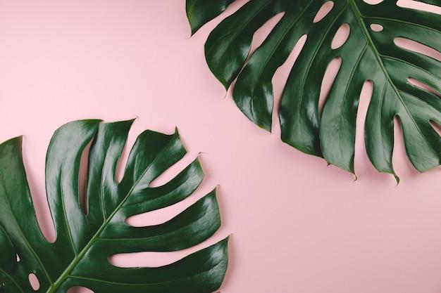 Vista superior hojas exóticas Foto gratis