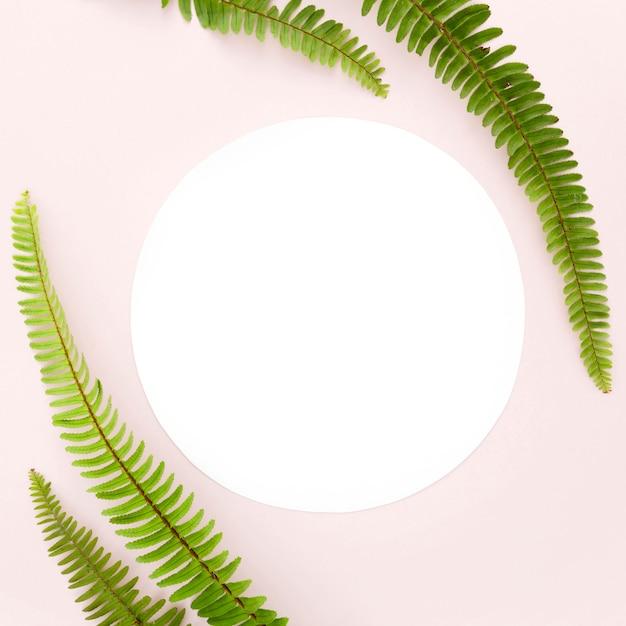 Vista superior de hojas de helecho con espacio de copia Foto gratis