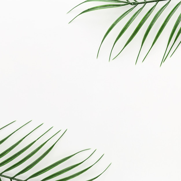 Vista superior de hojas de plantas delgadas con espacio de copia Foto gratis