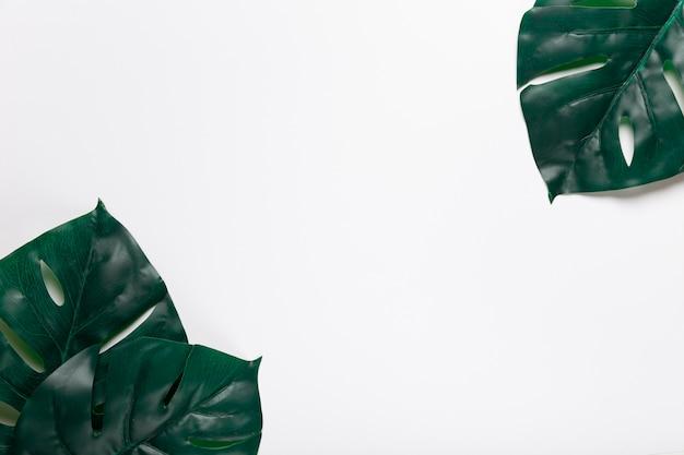Vista superior de hojas realistas en esquinas Foto gratis