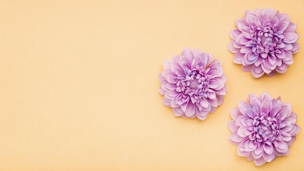 Vista superior del marco floral con fondo amarillo Foto gratis