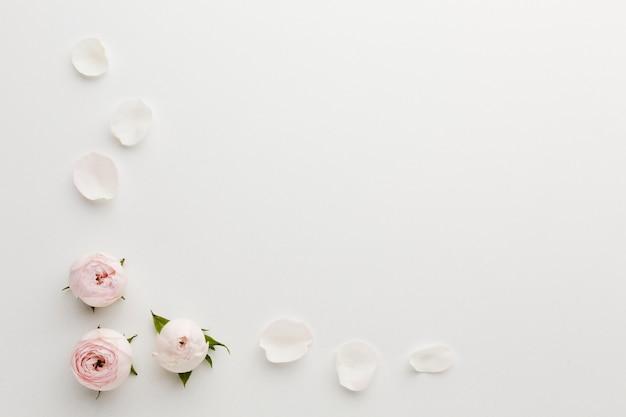 Vista superior del marco de pétalos de rosa y espacio de copia Foto gratis