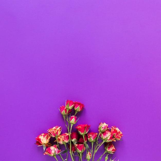 Vista superior ramo de flores de clavel sobre fondo violeta copia espacio Foto gratis