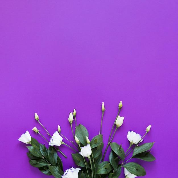 Vista superior ramo de rosas sobre fondo violeta copia espacio Foto gratis
