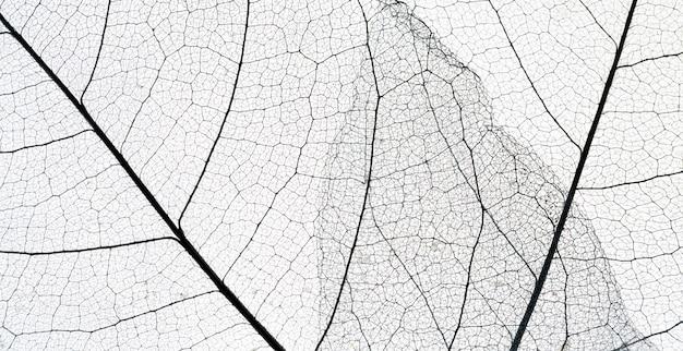 Vista superior de la textura de la hoja transparente Foto gratis