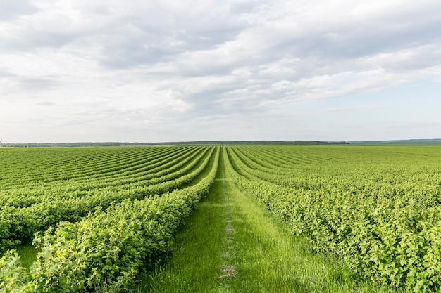 Vista de tierras de cultivo de alto ángulo Foto Premium