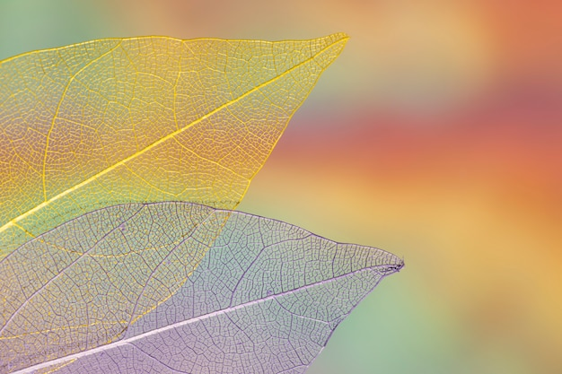Vívidas hojas de otoño transparentes Foto gratis