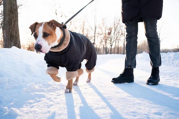 A spasso con un cane in cappotto caldo in una fredda giornata invernale. persona con un cane tirando il guinzaglio in un parco Foto Premium