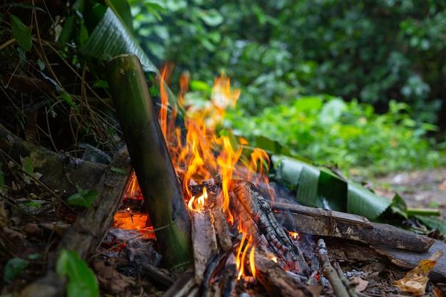 Accendere il fuoco nella foresta per il campeggio. Foto Gratuite