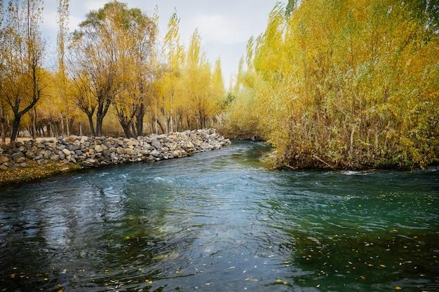 Acqua limpida del torrente che scorre attraverso il fogliame colorato boschetto nella stagione autunnale. Foto Premium