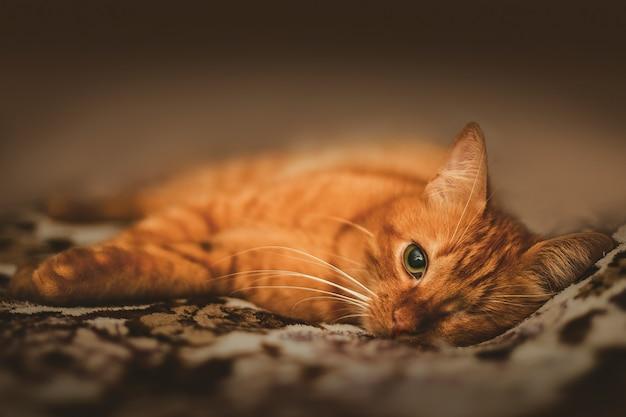 Adorabile gatto allo zenzero con un occhio solo Foto Gratuite