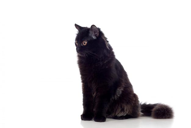 Adorabile gatto persiano nero Foto Premium