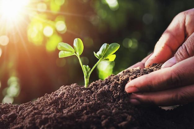 Agricoltore che pianta piccolo albero con luce solare in natura. concetto di agricoltura Foto Premium