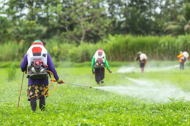 Agricoltore con la macchina e la spruzzatura del prodotto chimico al giovane giacimento verde del riso Foto Premium