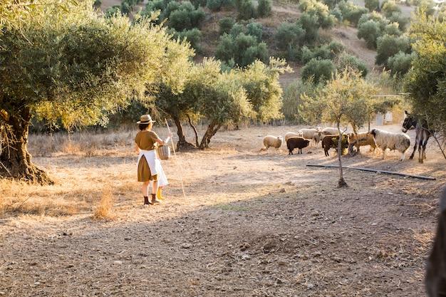 Agricoltore femminile che raduna le pecore in un frutteto verde oliva Foto Gratuite
