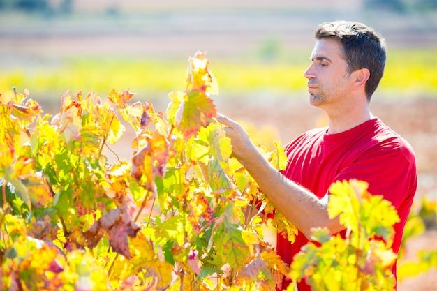 Agricoltore mediterraneo della vigna che controlla le foglie dell'uva Foto Premium