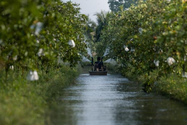 Agricoltore sulla barca con acque della macchina di irrigazione di terreni agricoli nel giardino di guava Foto Premium