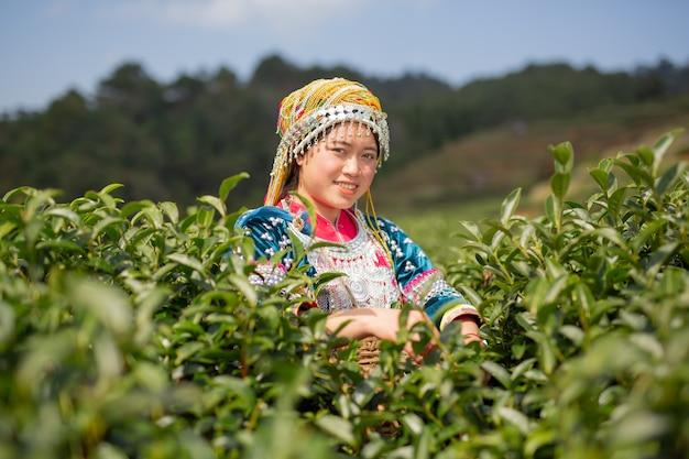 Agricoltura delle donne hilltribe Foto Gratuite
