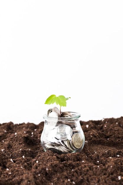 Alberi che crescono sulle monete Foto Premium