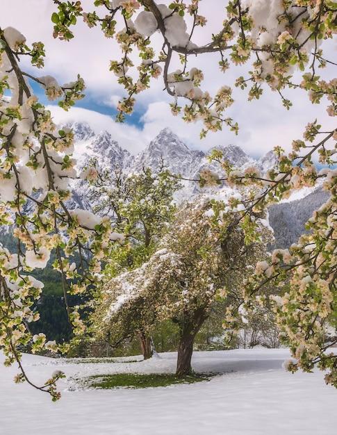 Alberi coperti di foglie verdi con terra e le montagne nevose Foto Gratuite