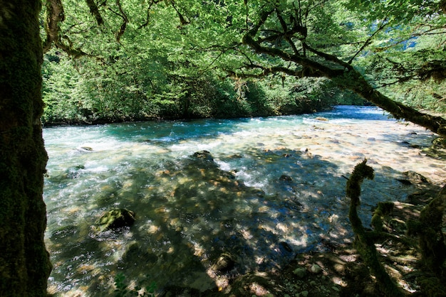 Alberi del fiume e di bosso della montagna sulla riva in abkhazia Foto Premium