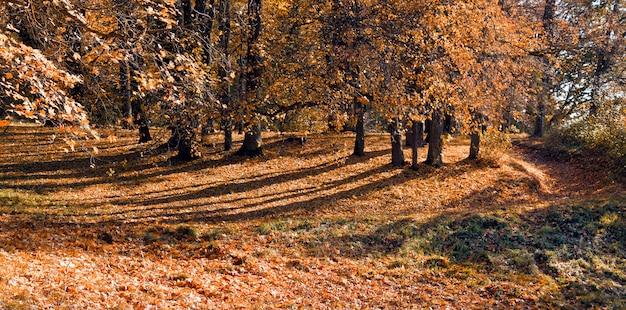 Alberi di autunno all'aperto in foresta. natura. Foto Premium