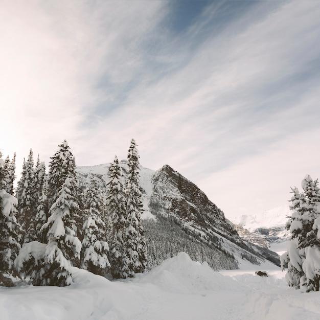 Alberi di pino con le montagne sulla priorità bassa del cielo blu Foto Gratuite