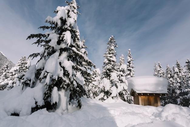 Alberi di pino ricoperti di neve Foto Gratuite