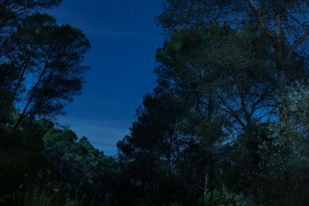 Alberi di vista frontale con il fondo del cielo notturno Foto Gratuite