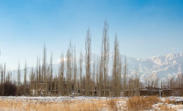 Alberi e villaggio di erba asciutti innevati bianchi nella stagione invernale con il fondo himalayano della gamma Foto Premium