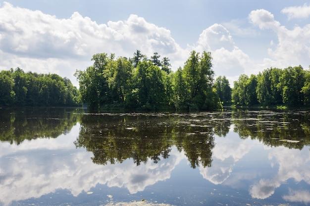 Alberi forestali sulla riva del fiume. riflessione nel fiume in una giornata di sole estivo. Foto Premium