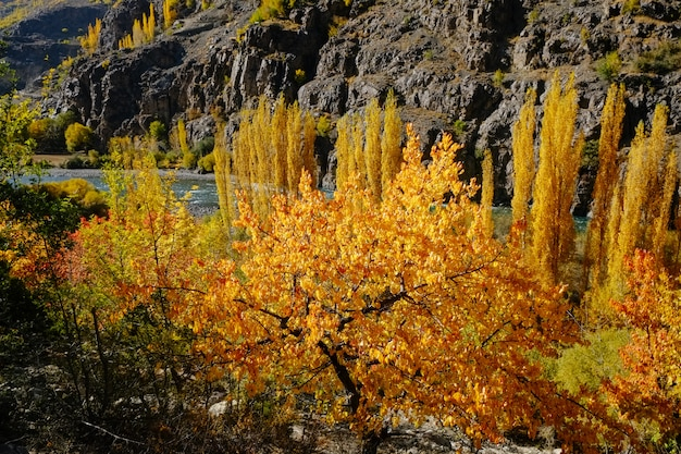 Alberi gialli e arancioni della foresta nella stagione di autunno. Foto Premium