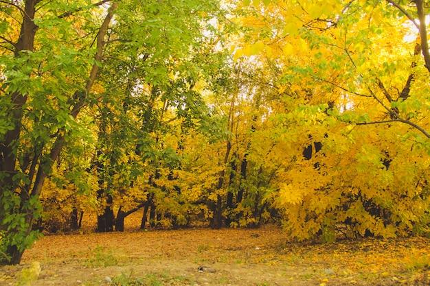 Alberi gialli e verdi nel parco tranquillo. concetto di autunno Foto Premium