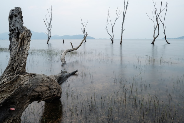 Alberi morti nella foresta intorno a un lago con bassi livelli d'acqua. tailandia Foto Premium
