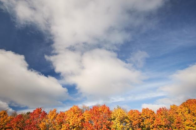Alberi rossi e gialli di autunno contro il cielo blu. la natura in autunno. paesaggio. Foto Premium