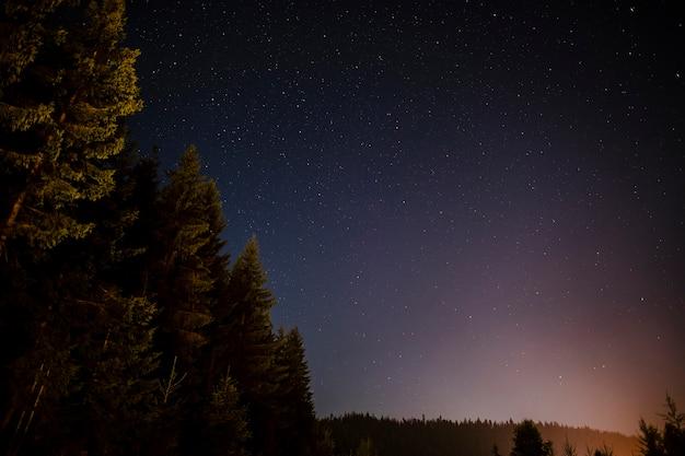 Alberi sempreverdi visti nella notte Foto Gratuite