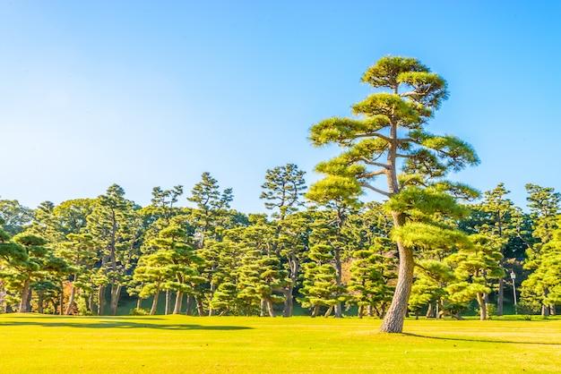 Albero dei bonsai nel giardino del palazzo imperiale alla città giappone di tokyo Foto Gratuite